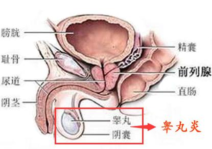 温州男性睾丸炎去哪看男科好?