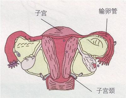 温州子宫内膜息肉严重会造成哪些危害呢?